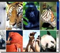 Different species