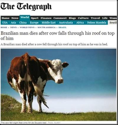 a98655_headline_4-cow