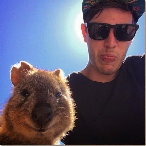 selfies-australian-quokka-014