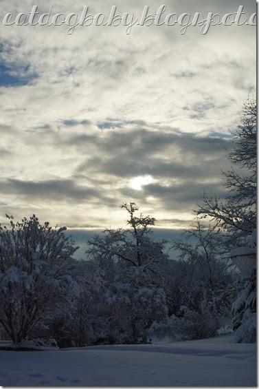 2014-02-13 snow 2.0 tree (1)