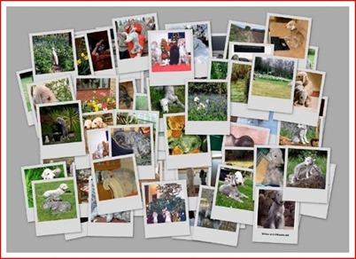 calendar2010a[5]_thumb[2]