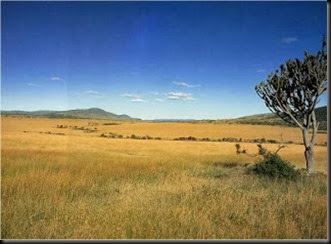Savannah grassland