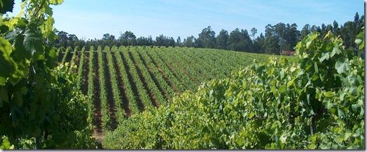 vinho-verde-vinho-e-delicias