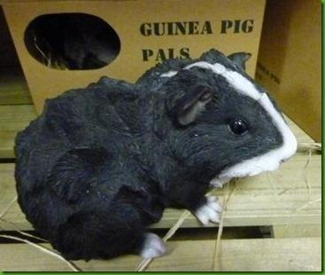 guniea pig at Hollybush