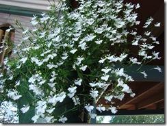 july flowers 20117