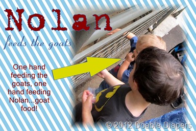Nolan feeds the goats jpg
