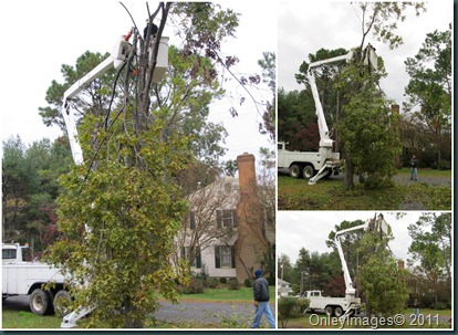 tree removal2