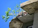 Озеленение_Ужгородски1.jpg