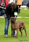 20100513-Bullmastiff-Clubmatch_31099.jpg
