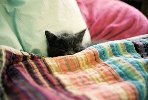 animal,cats,animals,cute,kitty,sleep-c292c7110587eb2335e93836282b81c3_h_large