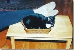 big cat, little basket