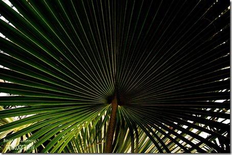 nature_20120814_palm