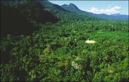 Floresta ao Sul da Venezuela