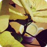 01 von 12 Kaffee unterm Weihnachtsstern