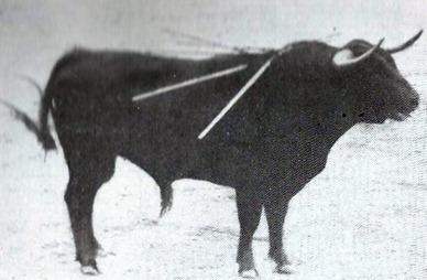 Toro Vistahermosa (Murube) 001