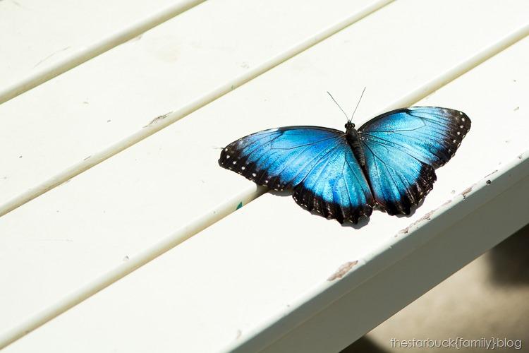 Callaway Gardens butterfly garden blog-9