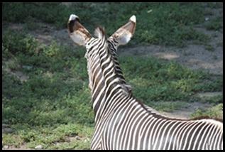 Zoo5 051