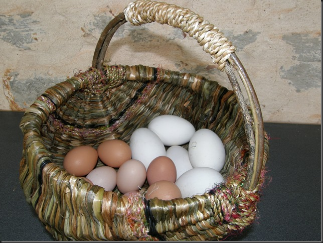 chook and goose eggs in Spring