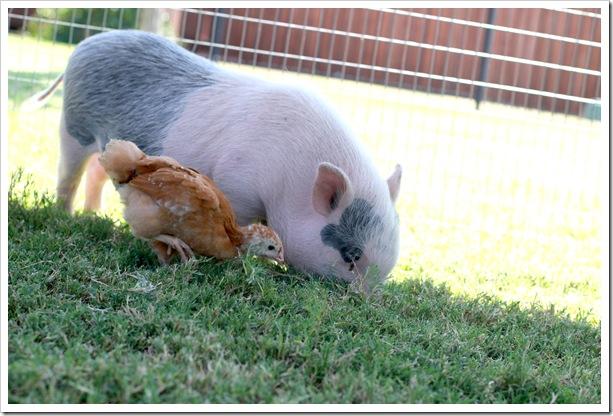 petting zoo IMG_9485