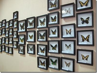 бабочки 142