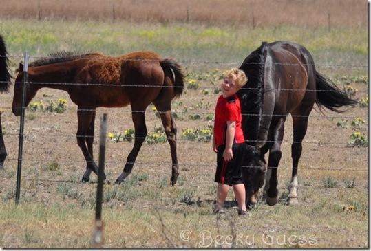 06-11-13 Zane and horses 01