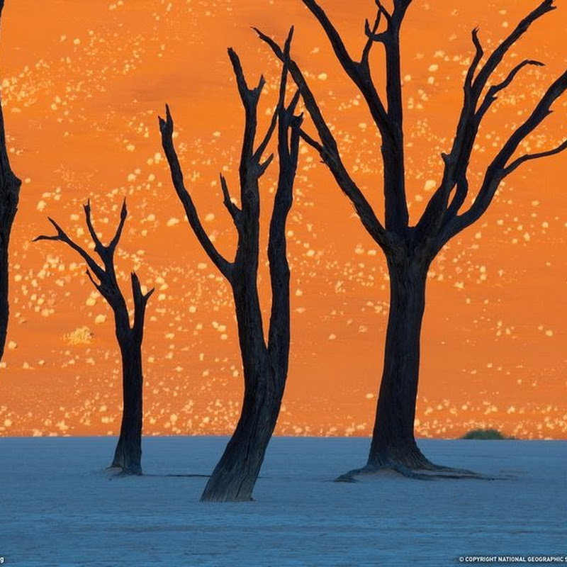 Surrealistic Landscape of Deadvlei, Namibia