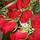 roses at circa in Toronto, Ontario, Canada