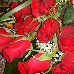 roses at circa in Toronto, Ontario, Canada