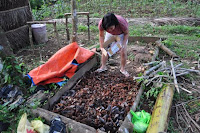 pinoyecofarm november_0032.JPG