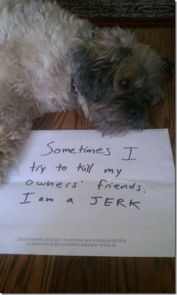 dog-shaming-bad-18