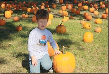 Pumpkins 040
