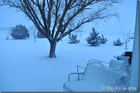 02-12-13 snow 4