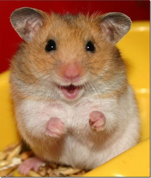funny-animals-cute-33