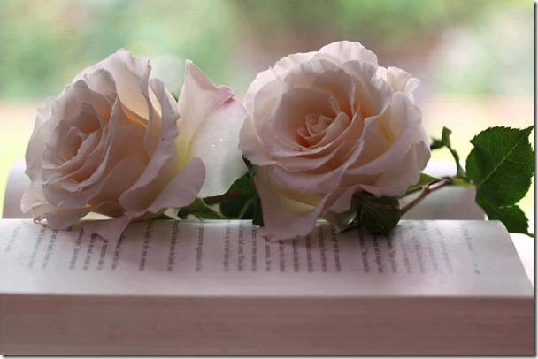 flores-facebook-tumblr-rosas-las flores-fotos de flores-738