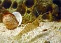 Manche Atlantique grotte du homard crevette bouquet