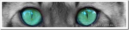 CatsEyesIMG3618