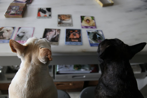 There are many different dog breeds on these cards and each one has a different personality trait that's printed beneath the photo.
