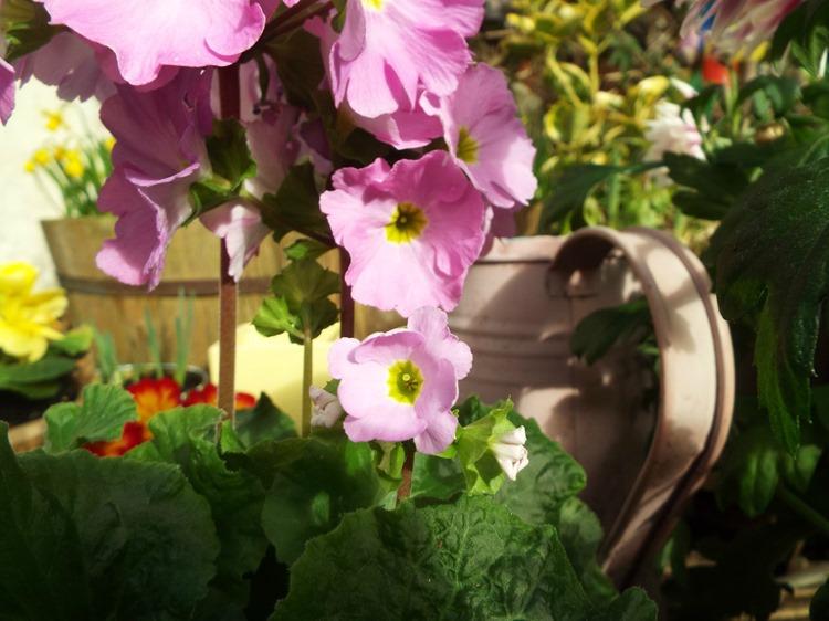 sunday gardening