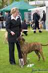20100513-Bullmastiff-Clubmatch_31084.jpg