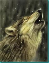 lobos imagenesifotos (4)