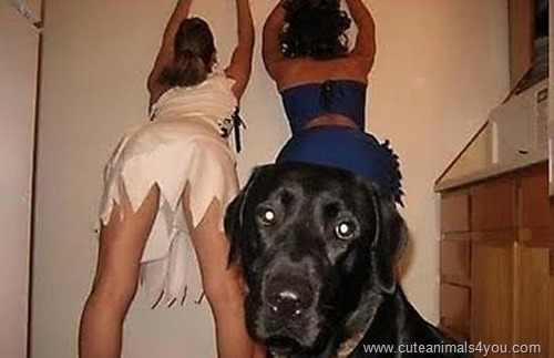 50_Funniest_Animal_Photobombs_Of_All_Time_10