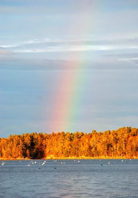 7. rainbow-kab