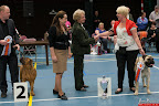20130510-Bullmastiff-Worldcup-1080.jpg
