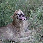 KrugerNationalPark