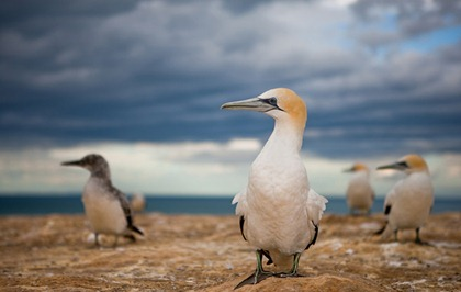 seagulls_aisuy