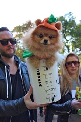 mascotas disfrazadas humor halloween (16)