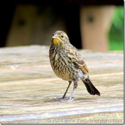 bronx-willdlife-nybg-bird
