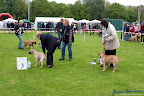 20100513-Bullmastiff-Clubmatch_30863.jpg