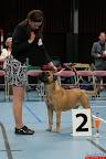 20130510-Bullmastiff-Worldcup-0577.jpg