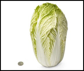 28-chinese-cabbage[1]